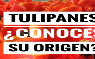 Tulipanes… ¿Conoces su origen?